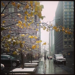 Winter-kissed autumnal leaves in downtown Ottawa...