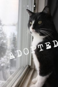 Whistler, adopted February 11, 2015