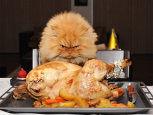 funny_cat_chef_cooking_wallpaper